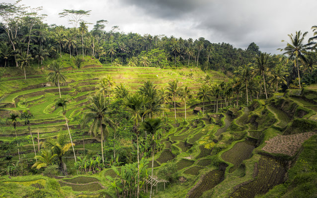 Rice terrace walk in Bali