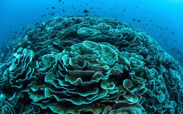 Great Barrier Reef Dying