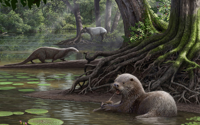 Wolf-sized Otters Once Existed in China