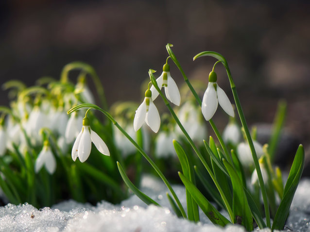 Why Early Spring is Bad for Health