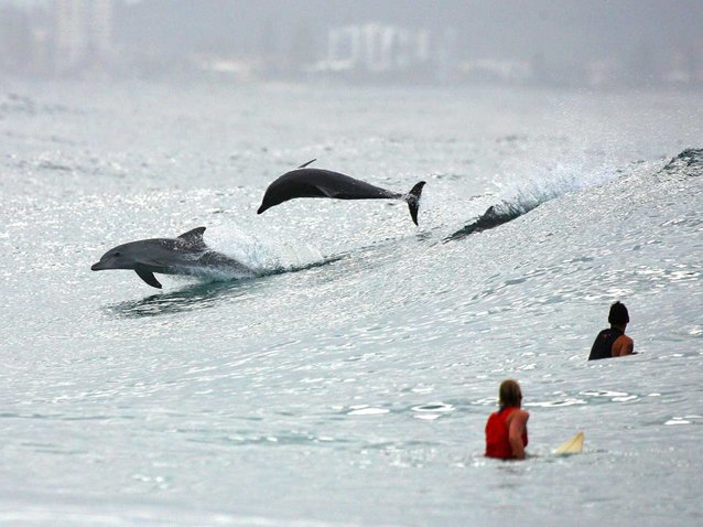 Dolphins In Surf