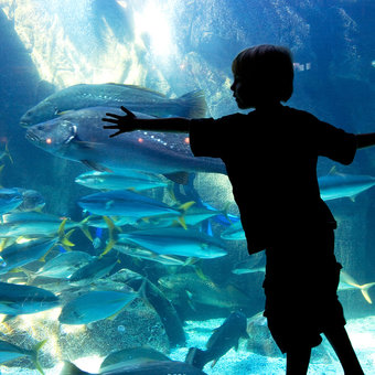 Top 5 Things to Do with Kids in Cape Town