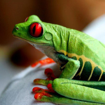 Best Places to Spot Wildlife in Costa Rica