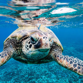 Best Places to See Animals on Maui