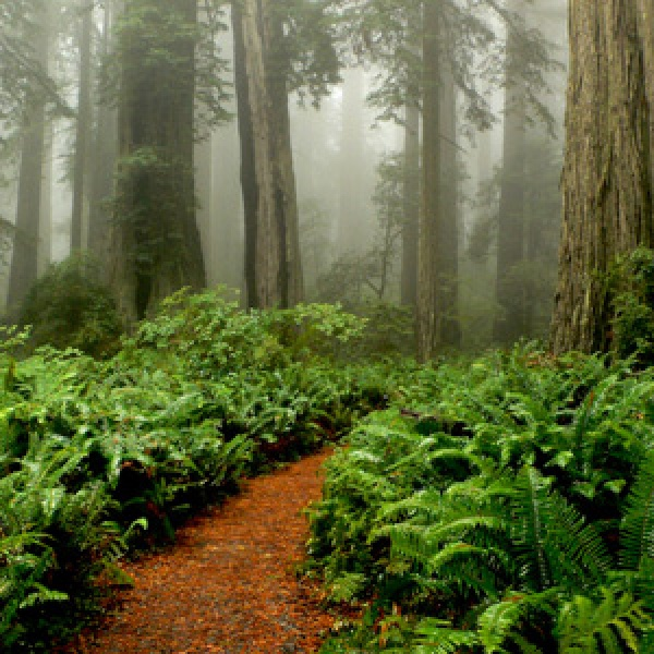 Tour Redwoods in Humboldt County