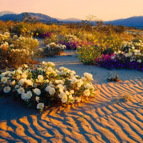 California's Borrego Springs on Foot