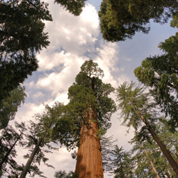 Explore California's Giant Redwoods