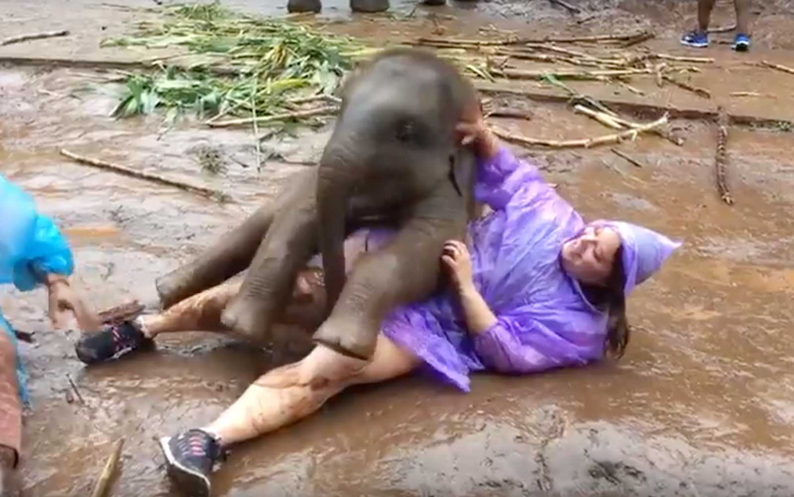 this might be the most adorable baby elephant attack anyone has ever