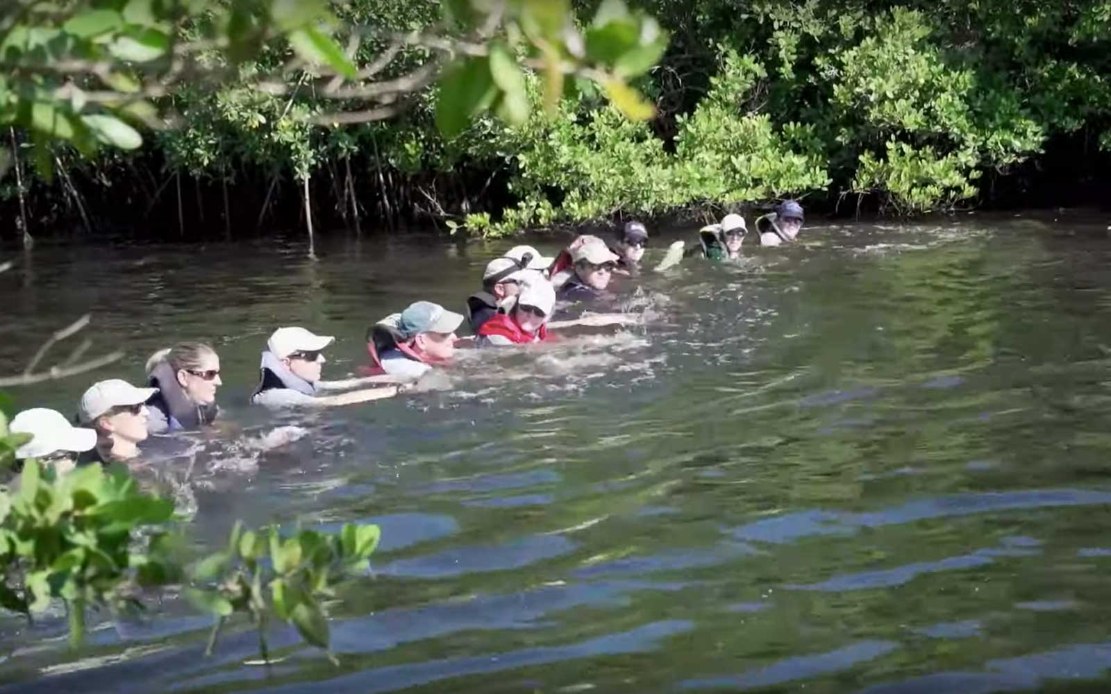 14 people created a human chain to lead trapped dolphins out of Florida canal