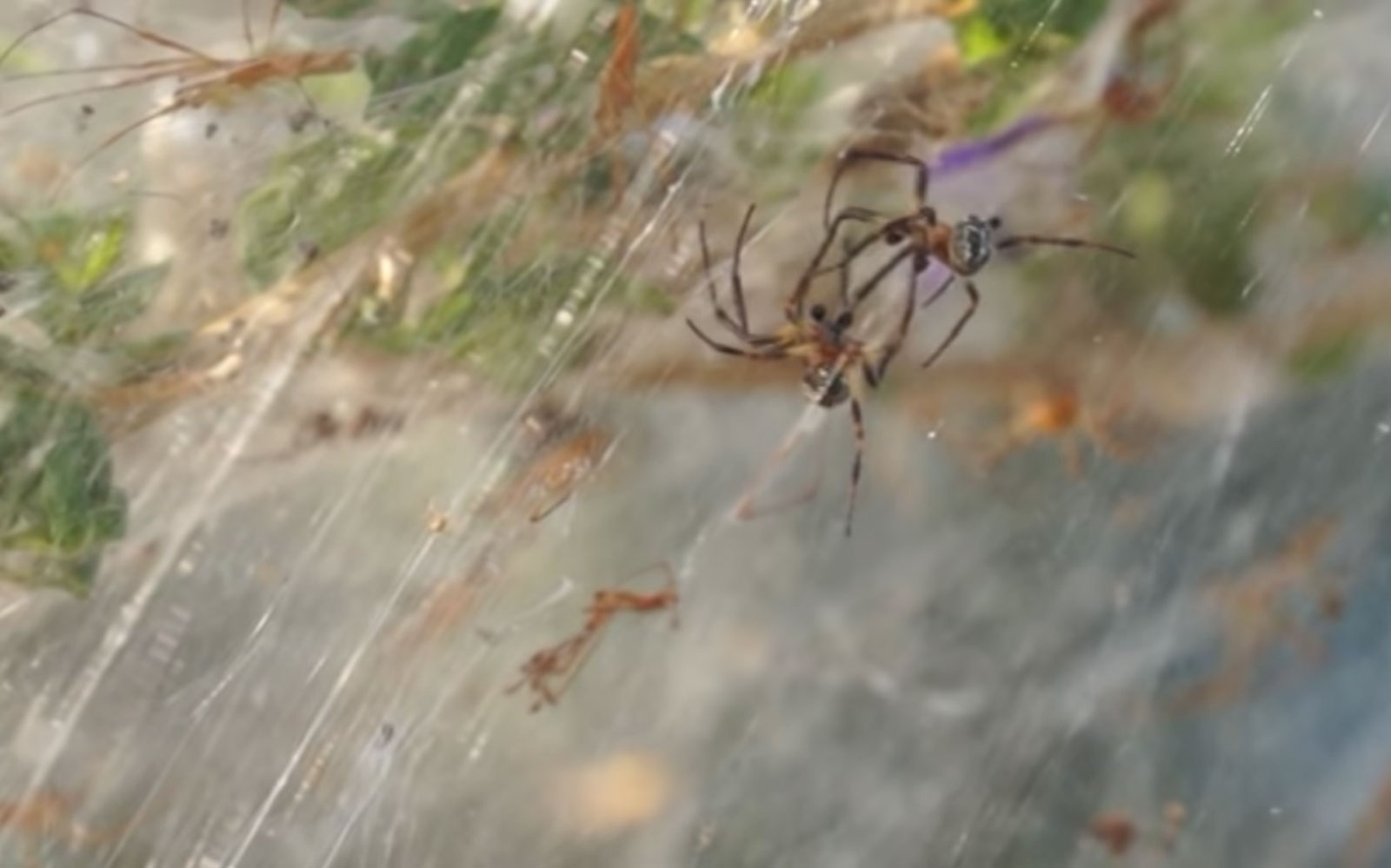 Thousands of spiders covered this Greek town in spooky webs just in time for Halloween