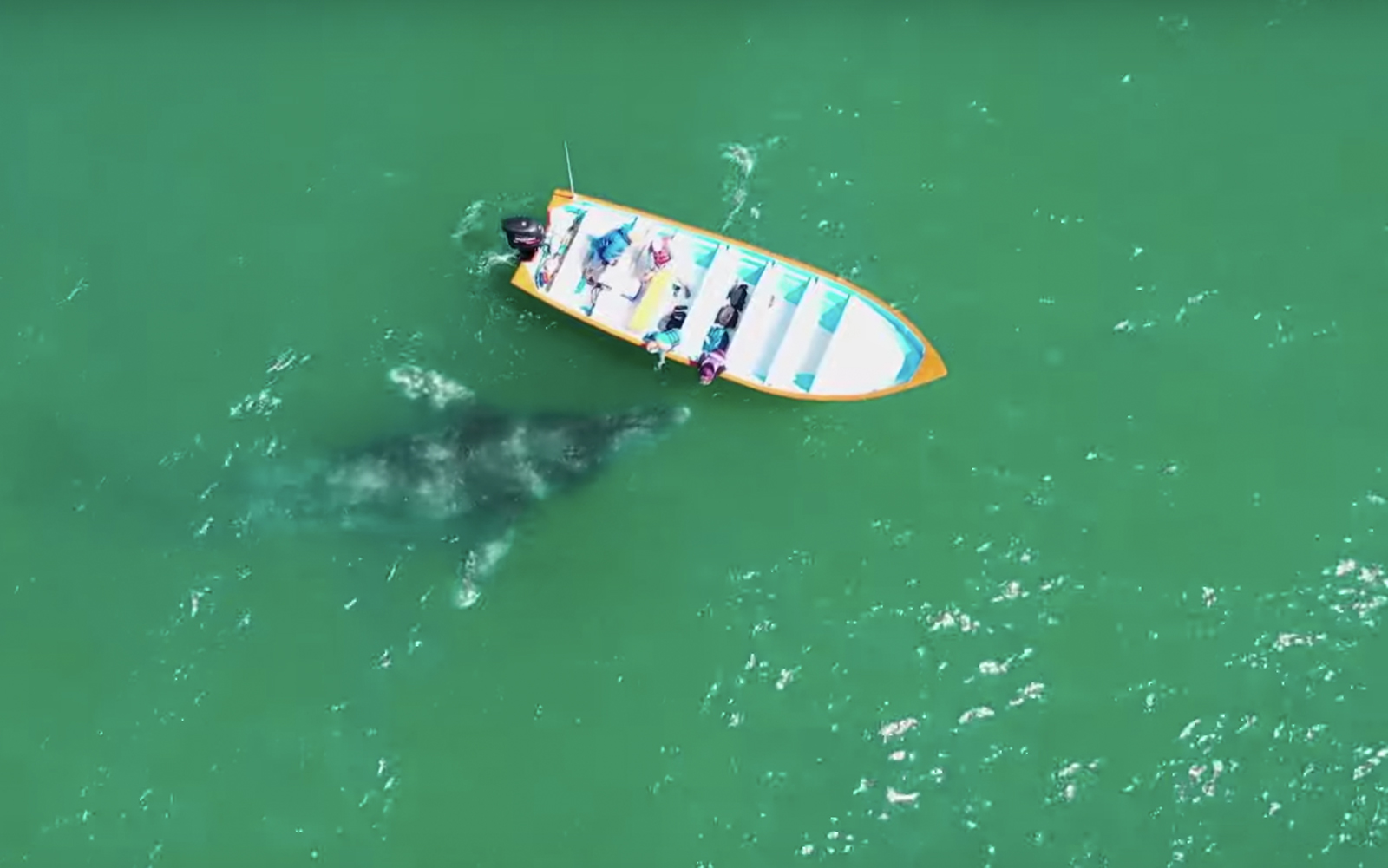 Friendly mother whale and calf greet boaters in Baja California in amazing drone video